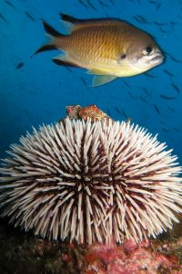 Biodiversity at the channel - Marco Aurélio Santos